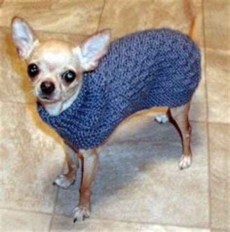 dog coat pattern for chihuahua chihuahua love on pinterest knit sweater patterns