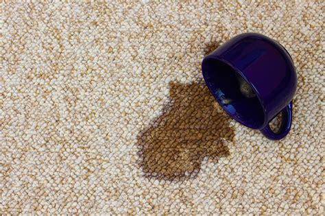 Coffee Stain On Rug by Remove Coffee Stains And Pet Stains From Your Carpet