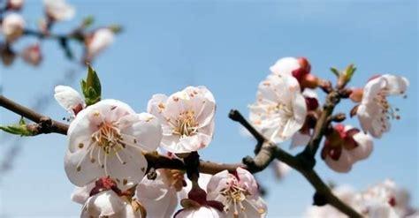 insonnia fiori di bach oltre i fiori di bach casi di insonnia