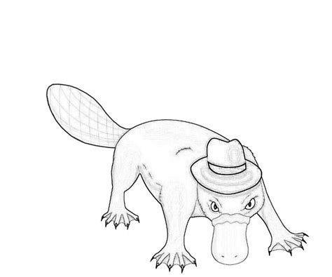 free coloring pages of perry the platypus baby