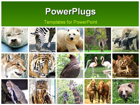 powerpoint templates zoo free wild animals collage
