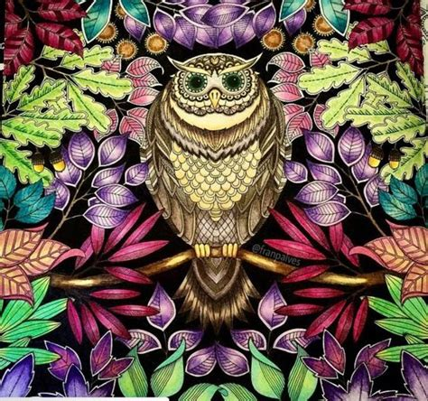 secret garden coloring book owl owl gel pens and coloring on