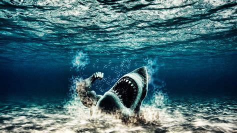 imagenes hd 1080p fondos de pantalla en hd1080p widescreen tiburones