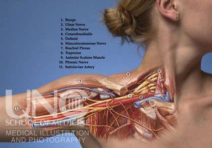 scalene muscles chiropractor chandler az
