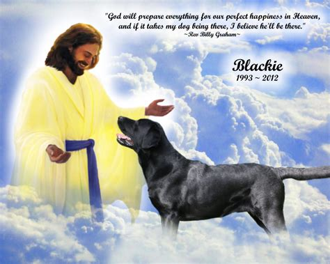 dogs in heaven image result for pics of doggies in heaven poems and other stuff