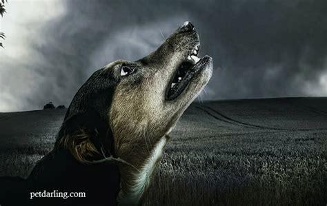 imagenes violentas reales 191 los perros ven fantasmas