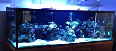 types of aquarium types of saltwater aquariums mad hatter s reef