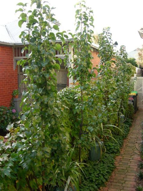 Flowering Shrubs For Afternoon Sun - space saving the inner gardener
