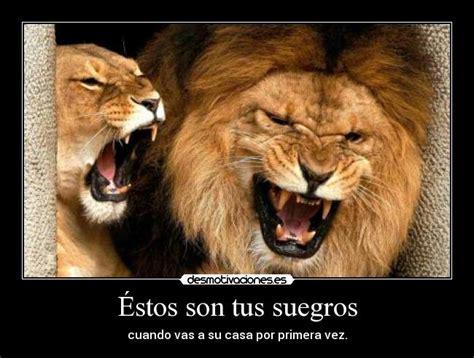 imagenes de leones feroces estos son tus pensamientos foto desmotivaciones memes