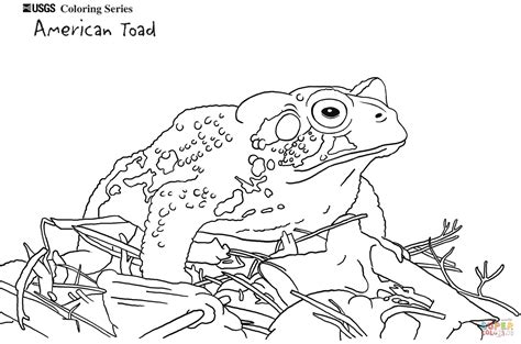 coloring pages frogs and toads american toad coloring page free printable coloring pages