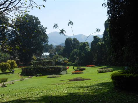 botanischer garten sri lanka sri lanka reisebericht quot botanischer garten in kandy quot