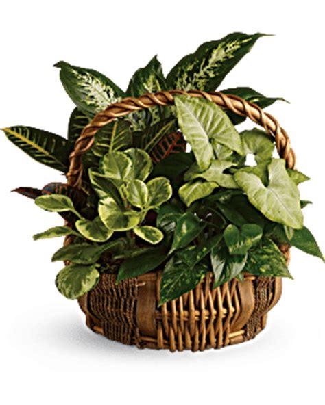 Emerald Garden Basket by Medium Dish Garden Flower Arrangement Teleflora