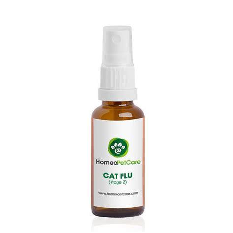 green eye discharge 17 migliori idee su cat eye discharge su fatti sul gatto tratta il gatto