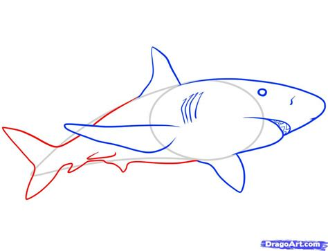 free how to draw how do you draw a shark step by step pencil drawing