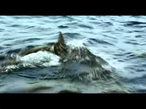 the open boat ending openwater videolike