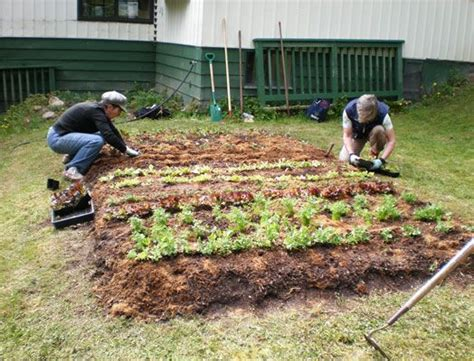 Buying Soil For Vegetable Garden 24 Best Images About Sheet Mulching On Gardens