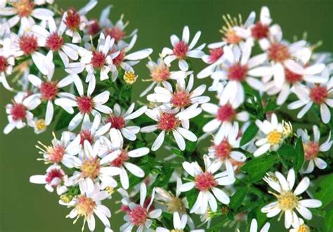 i fiori di bach come conservare i fiori di bach