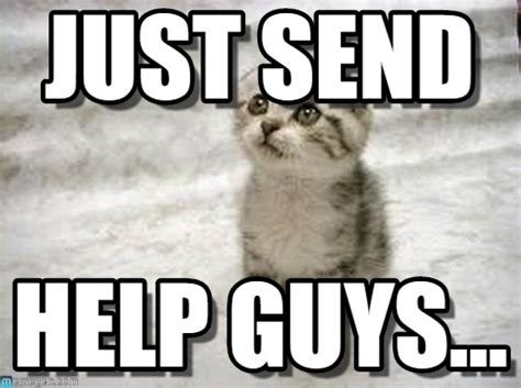 Help Meme - just send sad cat meme on memegen