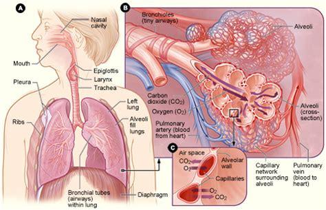pulmonologist dr h diener sarasota fl pulmonologists