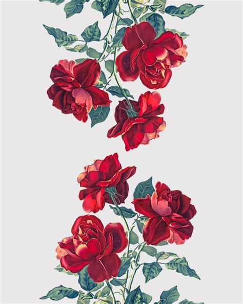 wallpaper tumblr red rose red roses flowers floral nature
