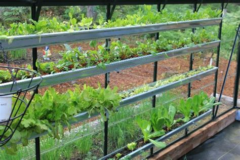 Gutter Vegetable Garden Growing Vegetables In A Greenhouse One Hundred Dollars A