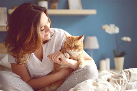 Come Tenere Un Gatto In Casa by Come Tenere Pulita La Casa Con Un Gatto