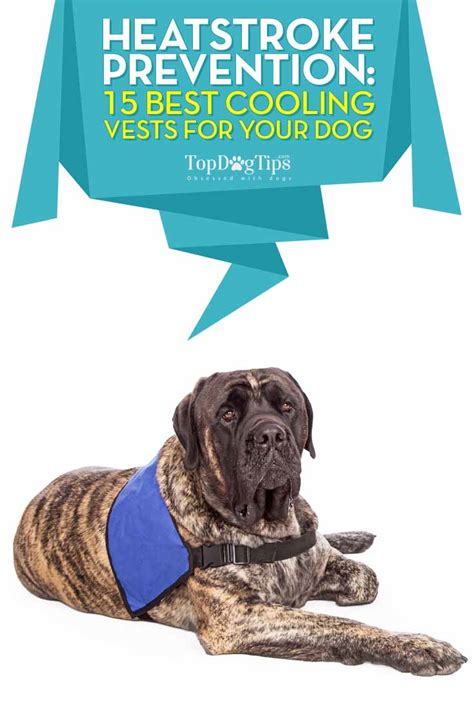 Pet Vest To Save Your Poochs Day by Top 15 Best Cooling Vest For Dogs To Prevent Heatstrokes