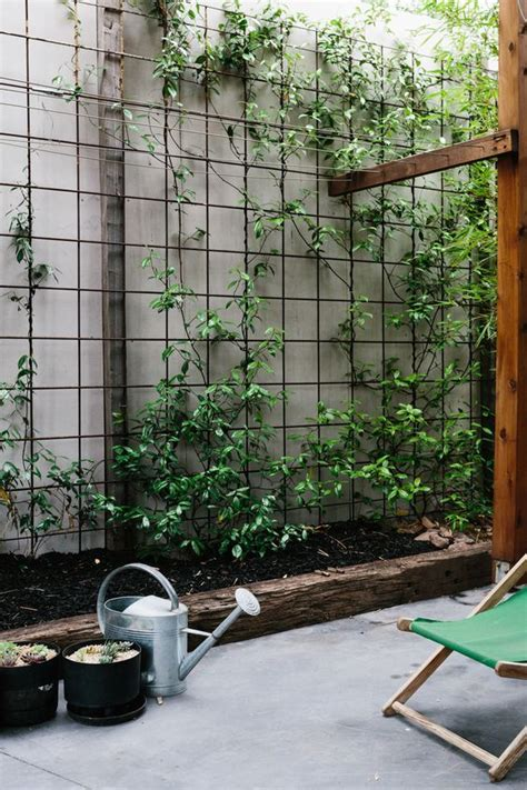 best 25 climbing vines ideas on pinterest plants for trellis wall climbing plants and