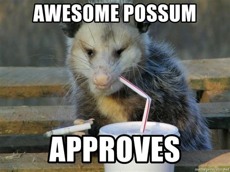 Possum Memes - awesome possum approves awesome possum meme generator