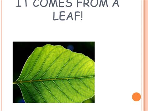 patterns in nature biology powerpoint natural patterns powerpoint