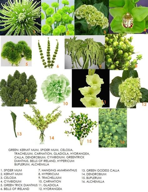 25 best green flowers ideas on pinterest floral arrangements flower arrangements and wedding