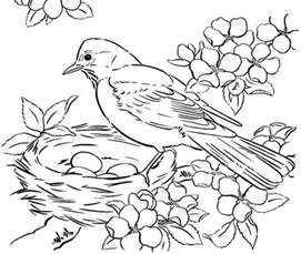 coloring pages for adults birds cooloring com
