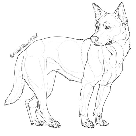 how to cattle dogs australian cattle coloring pages breeds picture