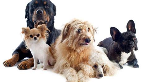 Perros Consejos Para Tu Perro Alimentaci 243 N Consejos