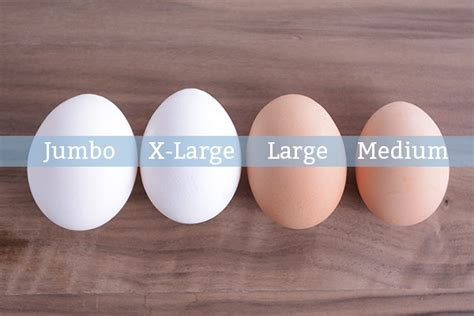 protein jumbo egg let s talk egg size why it matters