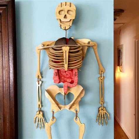 How To Make A 3d Human Out Of Paper - drawing the human for human skeleton human