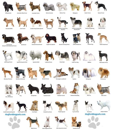 pets animals on pinterest dogs dog breeds and dog haircuts small dog breeds chart jaddid hd wallpapers