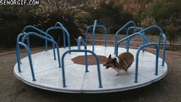 merry  rounds gifs find share  giphy