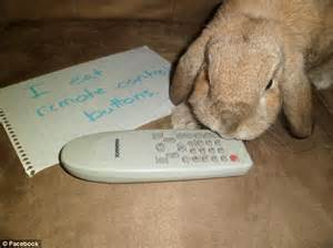First there was dogshaming now bunny shaming takes web by storm as owners post hilarious