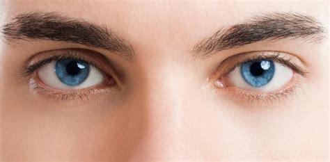imagenes de ojos de jaguar ojos noticias y art 237 culos