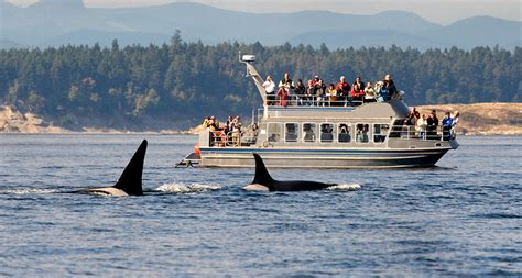 boat cruise victoria bc whale watching victoria bc destination bc official site