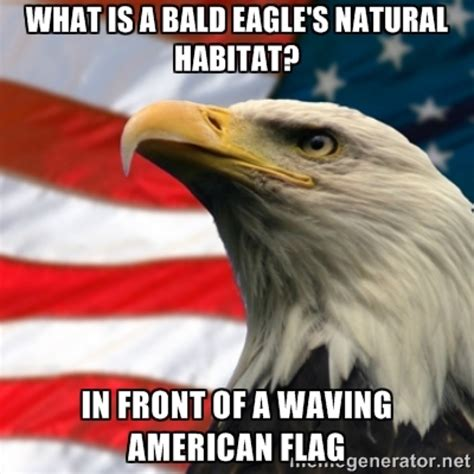 Eagles Memes - funniest bald eagle meme compilation america