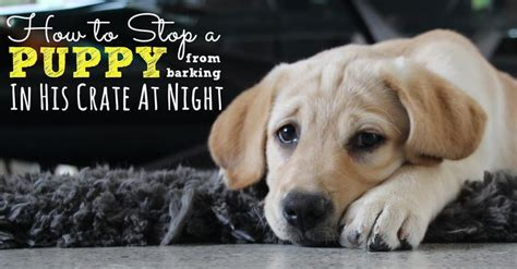 how to stop puppy from barking in crate best 25 puppy crate ideas on crate furniture crate and