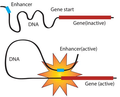 image enhancer finding enhancers in mosquitoes and beyond igtrcn