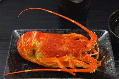cucinare aragosta le differenze tra l aragosta e l astice agrodolce