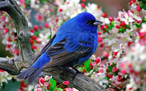 wallpaper flower and birds flowers on the bright feathers of birds photo wallpaper 6