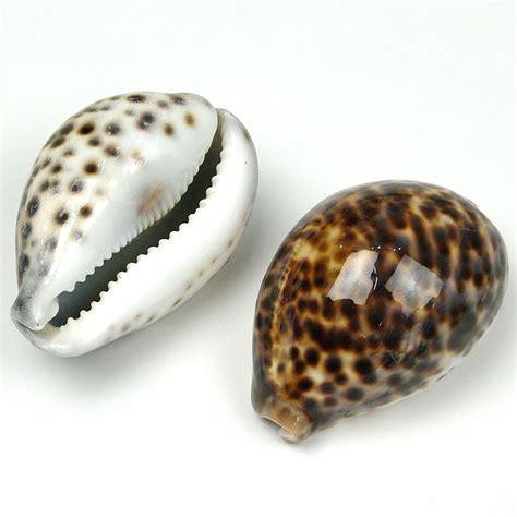 cowrie shell muumuumama rakuten ichiba branch rakuten global market