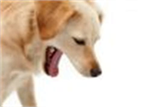 acid reflux in dogs spots on dogs belly causes and treatments dogs cats pets