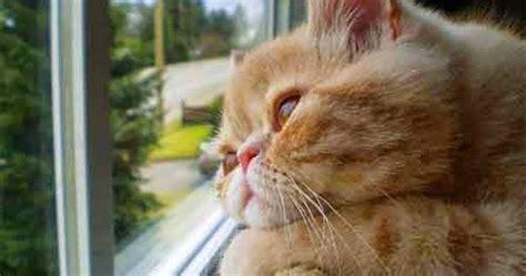 gambar lucu kucing galau sedih bingung lucu pool