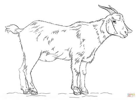 goat coloring book pages billy goat coloring page az coloring pages